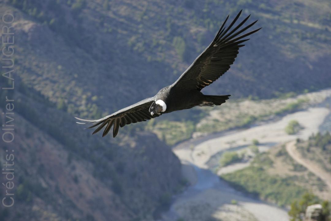 Parapente Lot Condor Patagonie